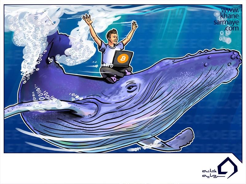 نهنگ ها در بازار ارزدیجیتال به چه کسانی اطلاق میشود؟